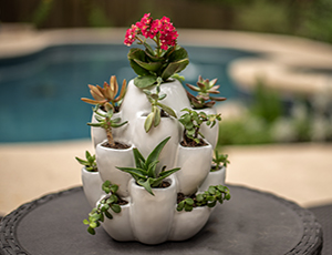 Cacti Pot Ceramic Planter
