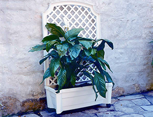 Calypso Planter with Trellis and Reservoir