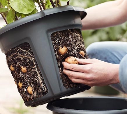 potato pot planter